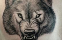 Wolf kop